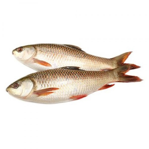 Rohu Fish - Large, Curry Cut/Bengali Cut, 1 kg