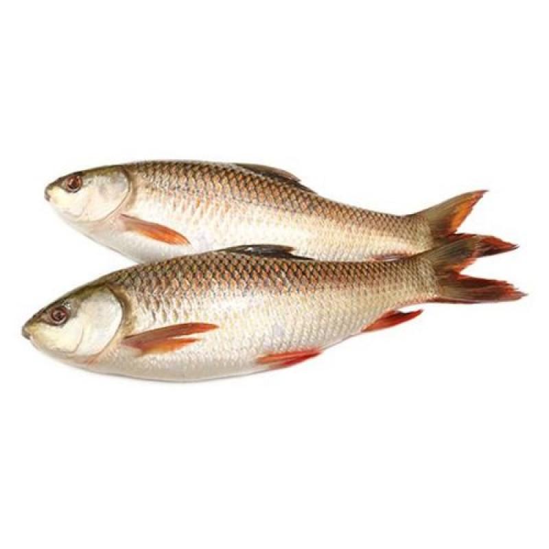 Rohu Fish - Large, Curry Cut/Bengali Cut, 1 kg